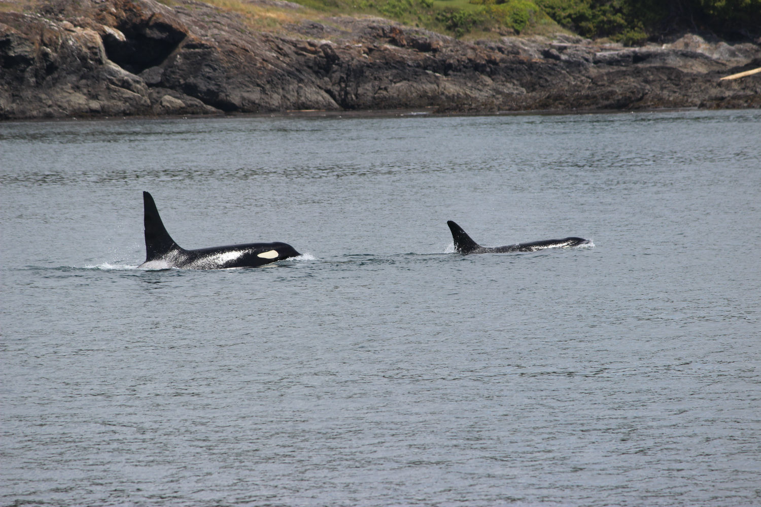 Whale Watching in the San Juan Islands : Podcast 16